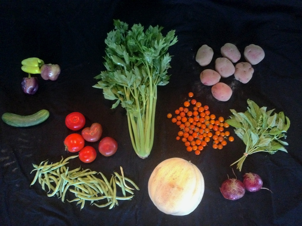 CSA Week 11: peppers, cucumber, slicing tomatoes, beans, celery, cantaloupe, cherry tomatoes, onions, basil, potatoes.