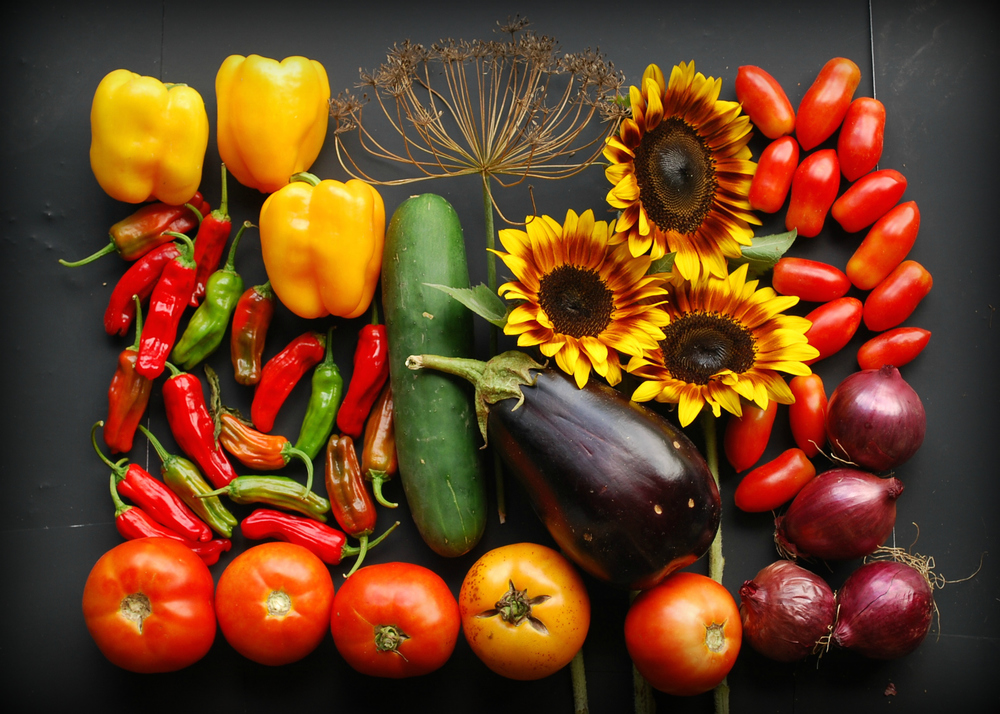 Week 15 CSA: Shishito peppers, bell peppers, slicing tomatoes, cucumber, dried dill head, eggplant, sunflowers, red onion, and Juliet tomatoes (some shares received the round Campari tomatoes instead)