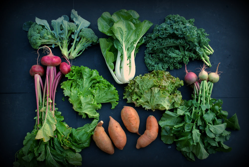 Your Week 5 share includes: red salad turnips, broccoli, green leaf lettuce, Bok Choy, curly kale, red leaf lettuce, watermelon radishes, sweet potatoes.