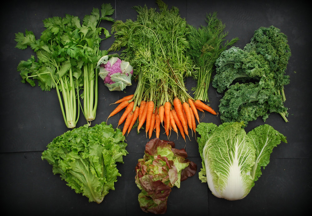 Your Week 9 share: celery, Romaine lettuce, red Butterhead lettuce, Napa cabbage, curly kale, dill, carrots, purple cauliflower.