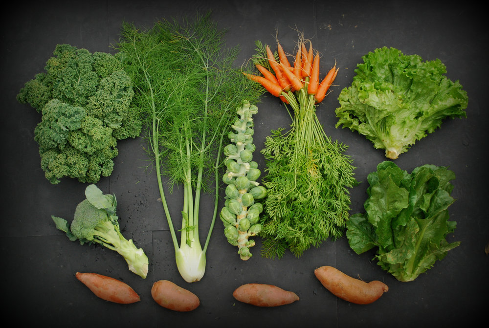 Your Week 10 share includes: curly kale, broccoli, sweet potatoes, fennel, Brussels sprouts, sugar carrots, Romaine lettuce and green leaf lettuce.