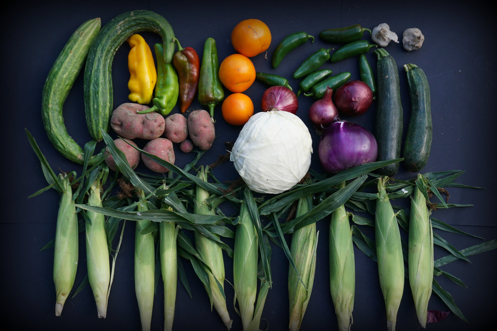 Clockwise from top left: cucumber, sweet roasting peppers, potatoes, tomatoes, cabbage, red onions, jalapeno peppers, eggplant, garlic, zucchini, and sweet corn.