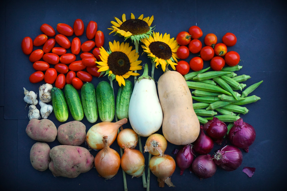 Your Week 20 share (clockwise, from top left): Roma tomatoes, sunflowers, Juliet tomatoes, okra, red onions, butternut squash, yellow onions, eggplant, cucumber, potatoes and garlic.