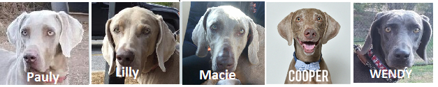 Pauly, Lilly, Macie, Cooper, and Wendy need foster homes!