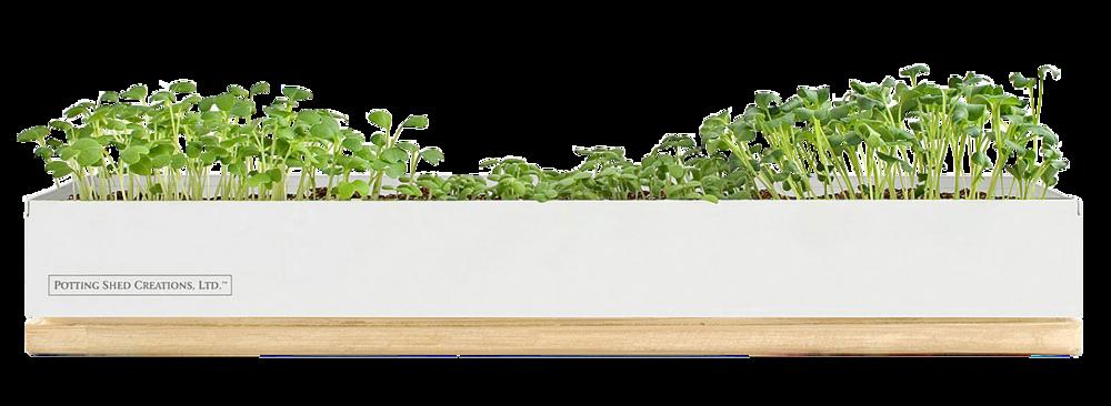 Microgreens Window Box, $48