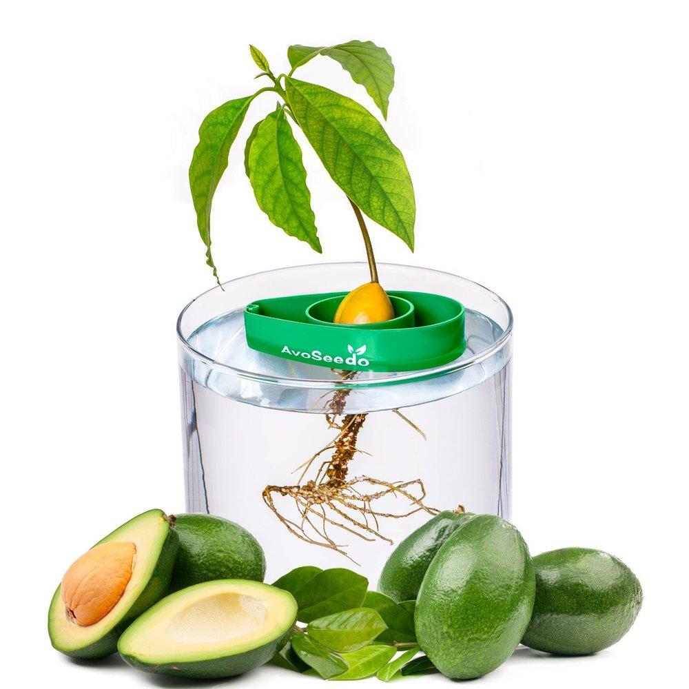 Avocado Tree Grower