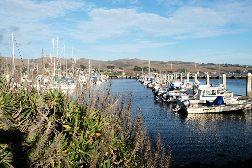 And takes you back into Bodega Bay…where the seafood is so popular the line was an hour long