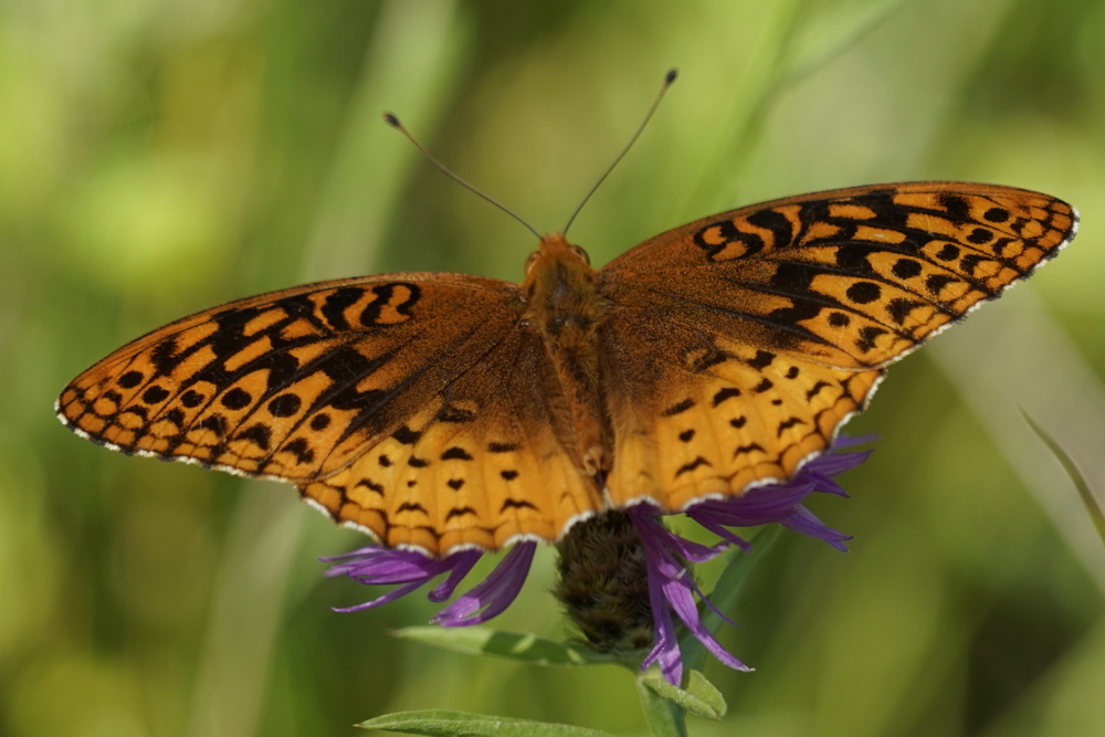 Butterfly of Sorts | Harriman State Park | NY