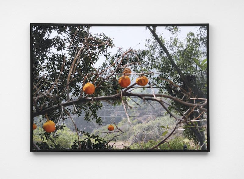Untitled (Oranges) I,2017, Archival inkjet print, 70 x 50 cm