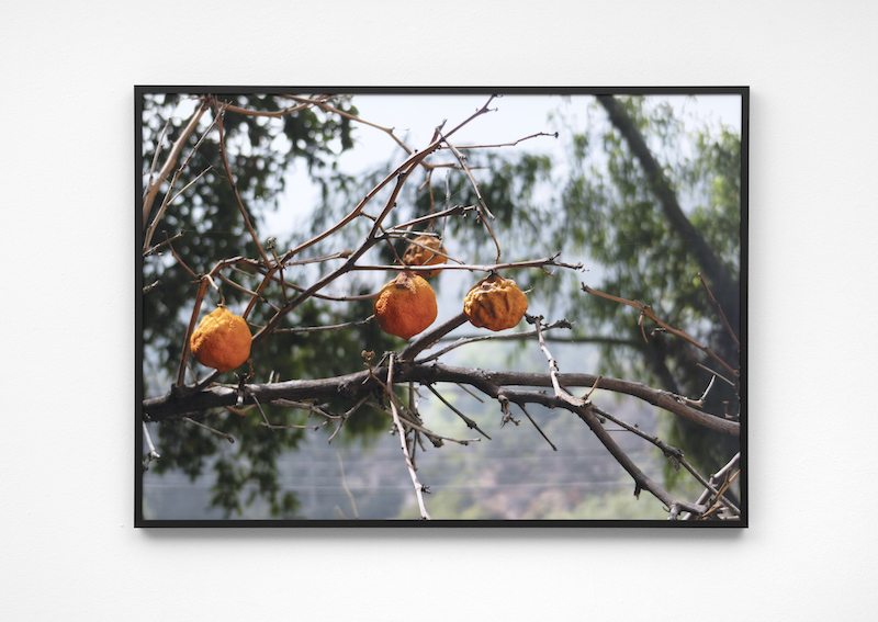 Untitled (Oranges) II,2017, Archival inkjet print, 70 x 50 cm