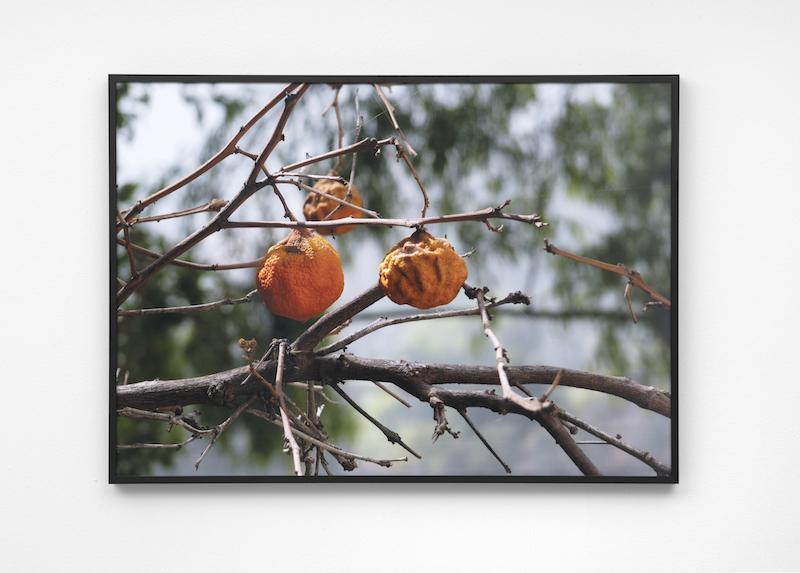 Untitled (Oranges) III,2017, Archival inkjet print, 70 x 50 cm