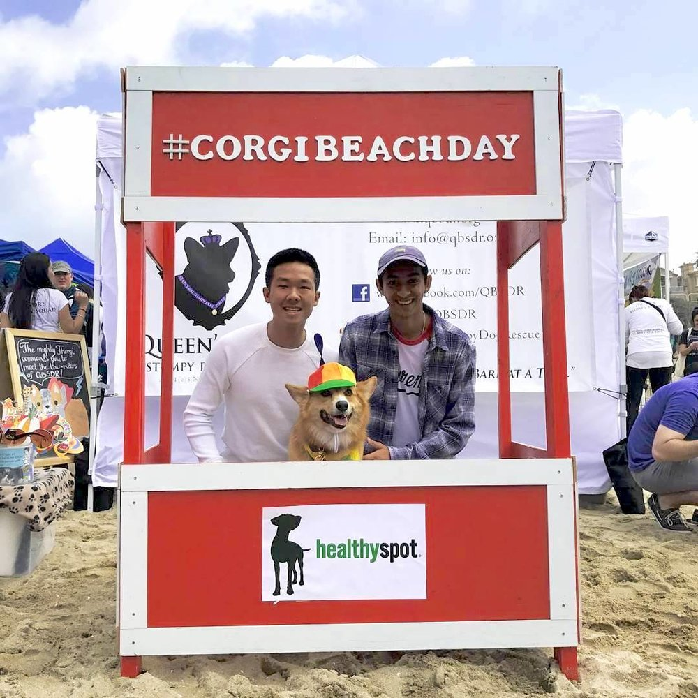 Corgi Beach Day 2017
