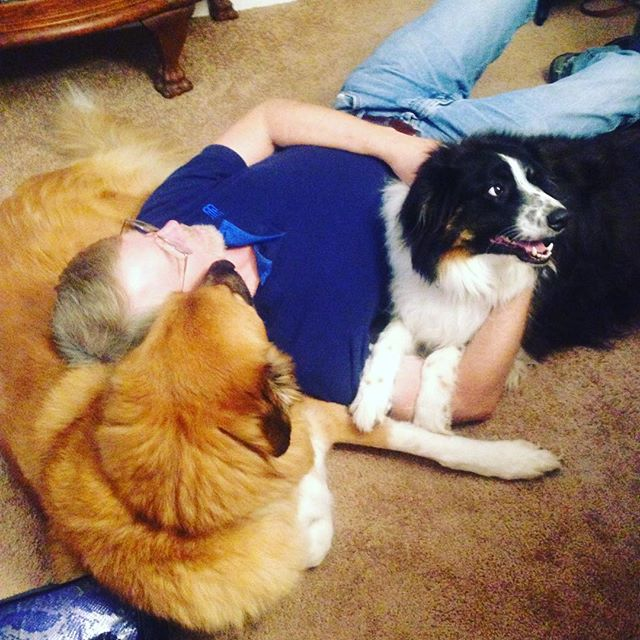 Why do I always get used as a pillow??? Hanging out with my Grandpa and my cousin Jacob (yes he was named after #MarcJacobs)  #DogPillow #PyreneesPack #DogHybrids #GreatBernese #MochaBearTheGreatBernese #BMD #GreatPyrenees #GentleGiantsOfInstagram