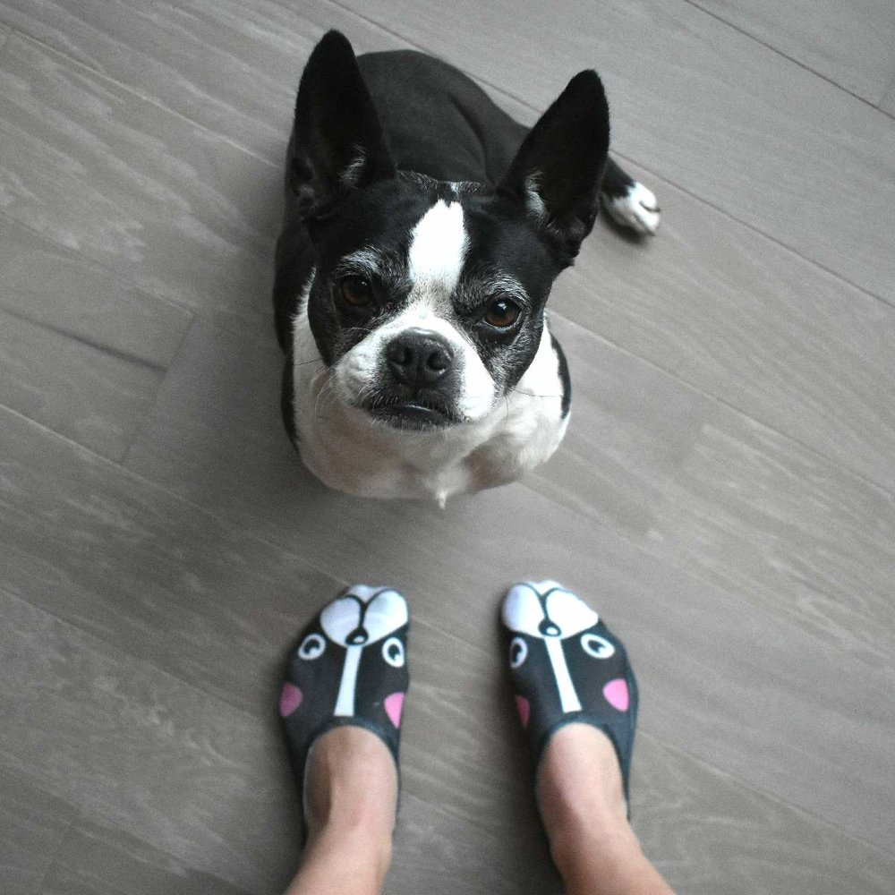 Made in USA Boston Terrier Socks only $8.50 at  www.LivingRoyal.com