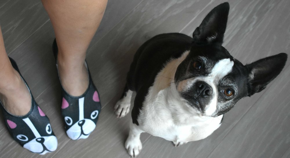Boston Terrier Socks  - Living Royal - Florum Fashion Magazine - made in USA -handmade -ethical -sustainable - american frenchie sokker slow fashion motemagasin advertisement annonse
