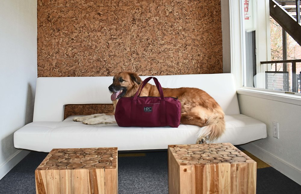 One of my favorite things about the Jupiter Hotel in Portland, Oregon is that the hotel is dog friendly. Naturally this meant that I had to bring my fluffy friend Mocha Bear, who as you can see immediately made himself comfortable on the couch next to my eco  Hamilton Perkins  luggage.
