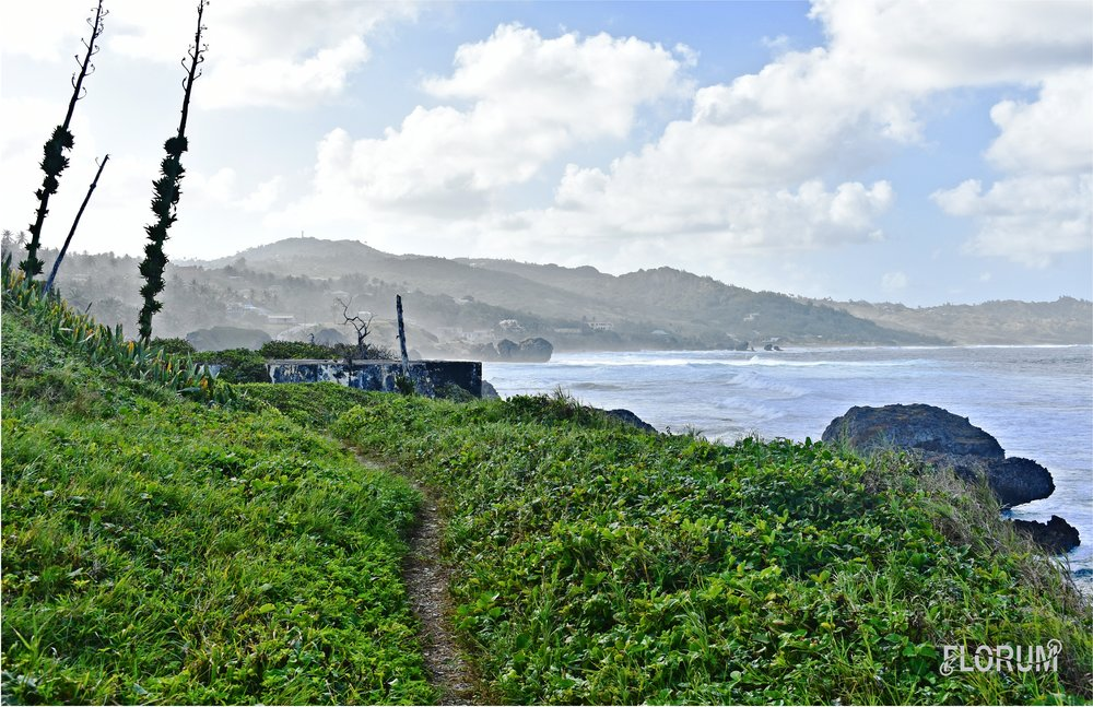 After passing Tent Bay Fish Market, you'll see a trail that leads up the hill with a pathway towards both Bathsheba Beach and Cattlewash Beach.  The east side of Barbados faces the Atlantic Ocean, which means that their are riptides. It is not advised to go swimming in these waters, however you will find mnay advanced swimmers and surfers in these waters.
