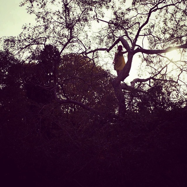 #rosebudthecoolestchickiknow master of tree climbers!