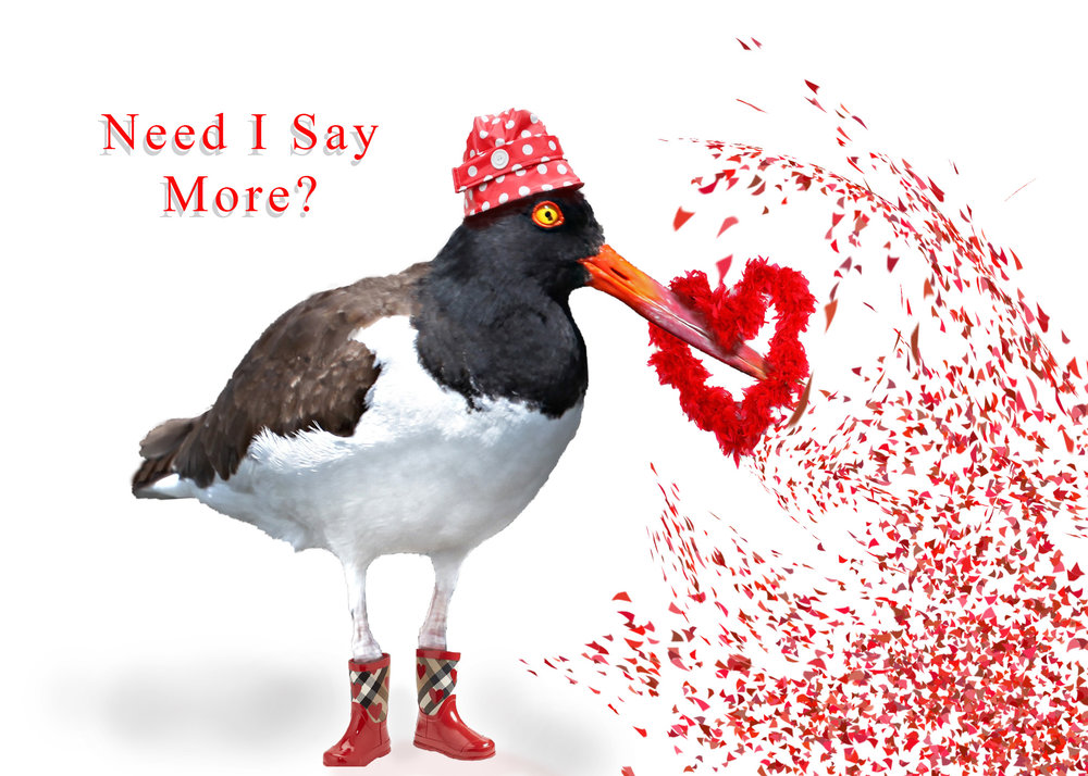 A Funny Bird wishing you a Happy Valentine's Day