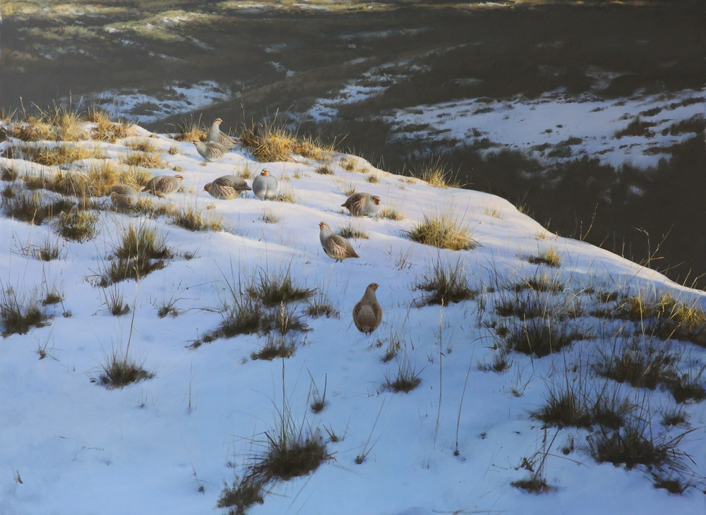 Partridges in the Snow