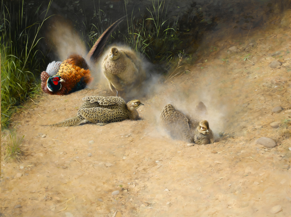 Dusting Pheasants