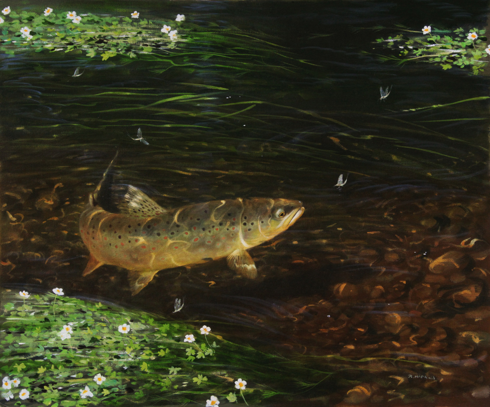 Rising Trout