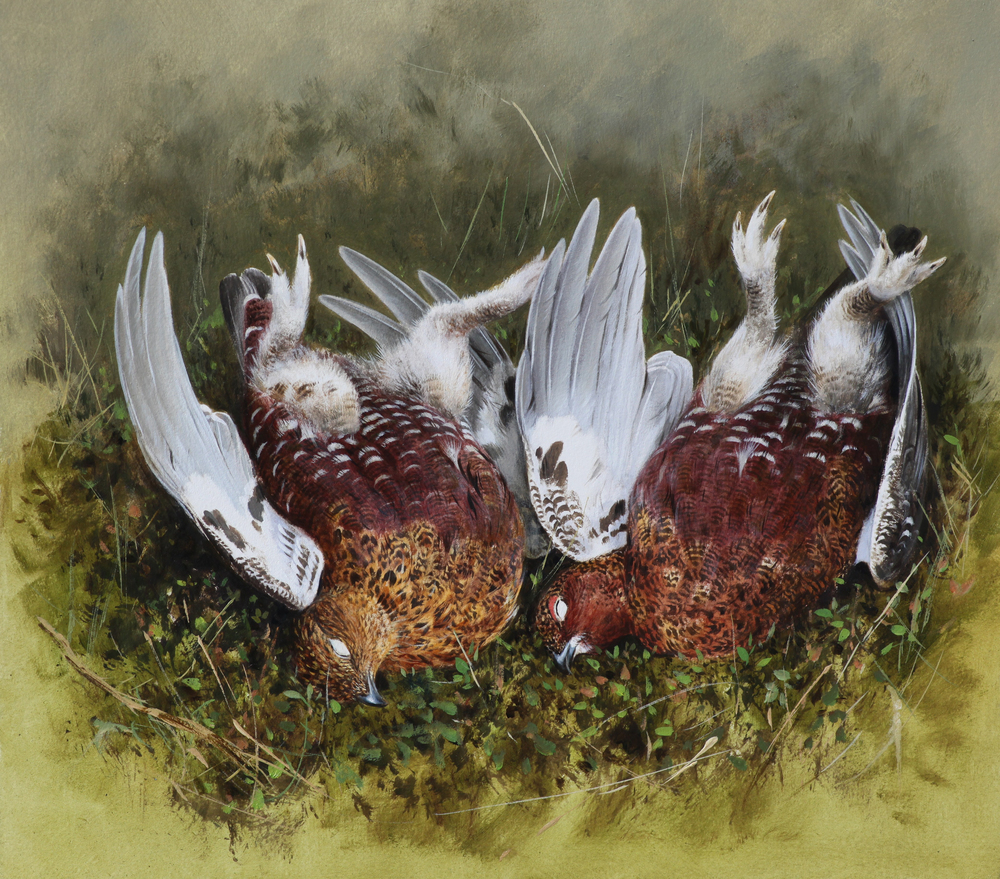Brace of Grouse