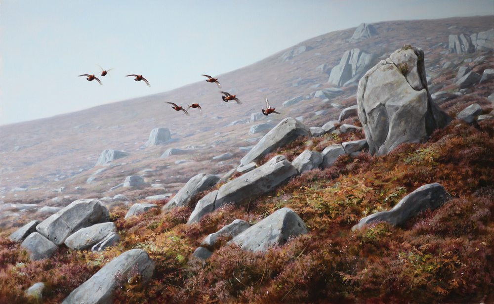Grouse Over Rocky Ground