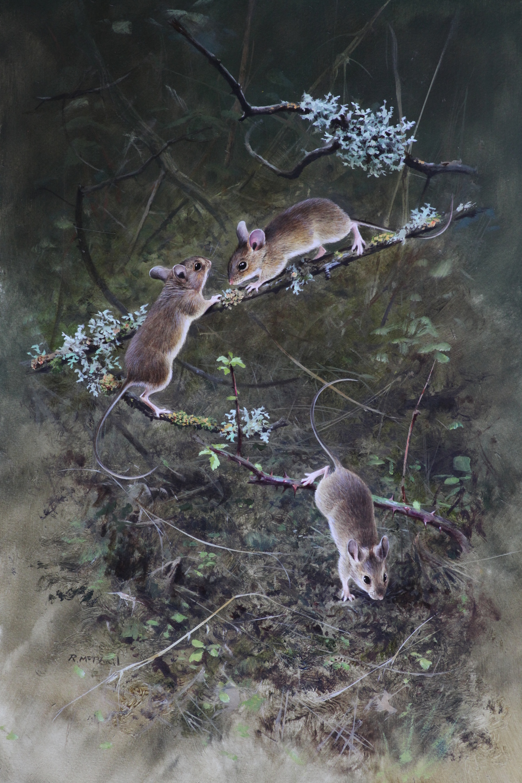 Wood Mice
