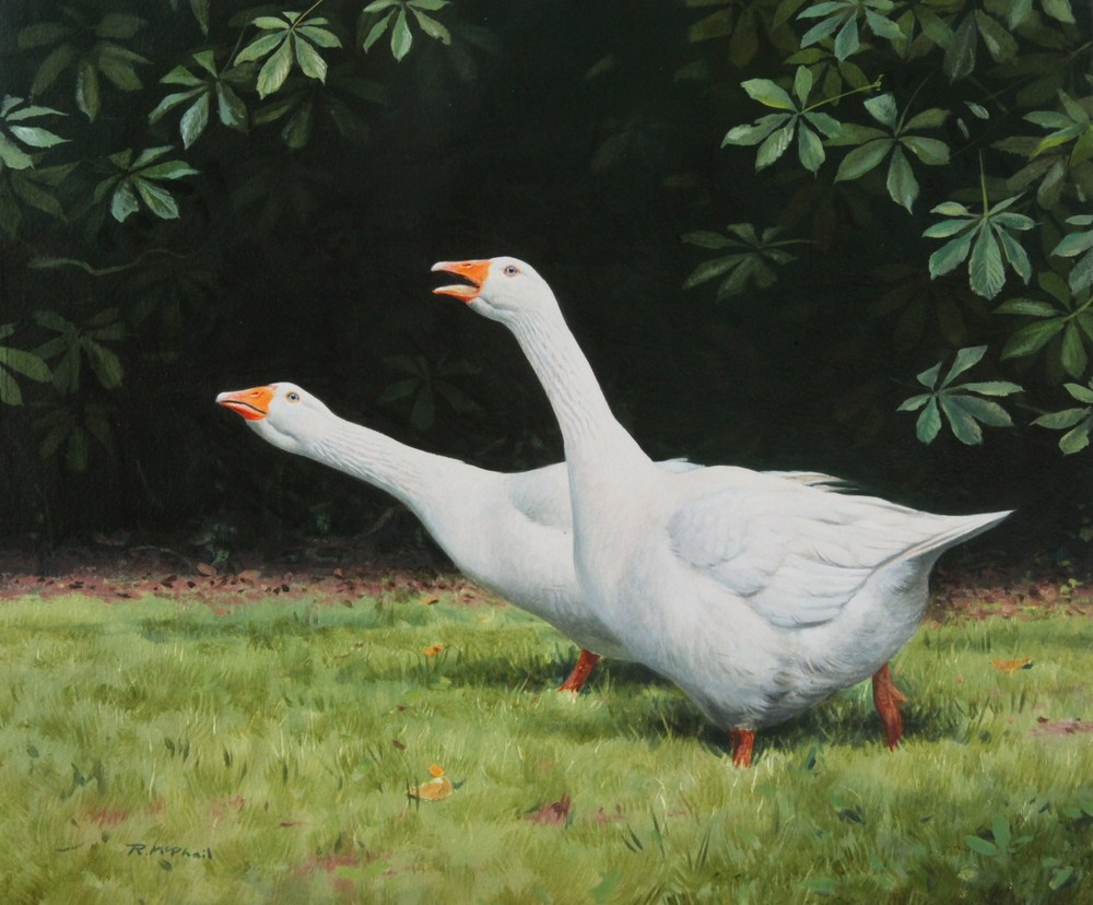 Two White Geese