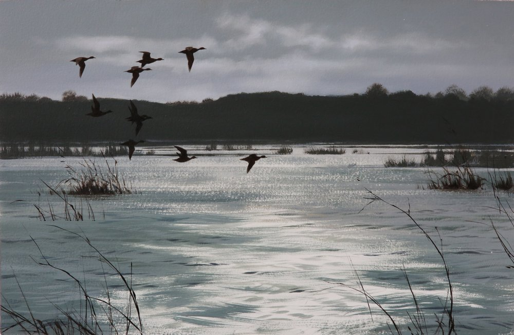 Wigeon Over Floods