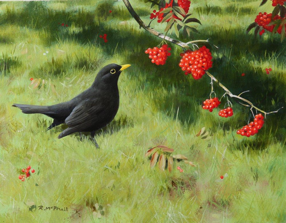 Blackbird with Rowan Berries