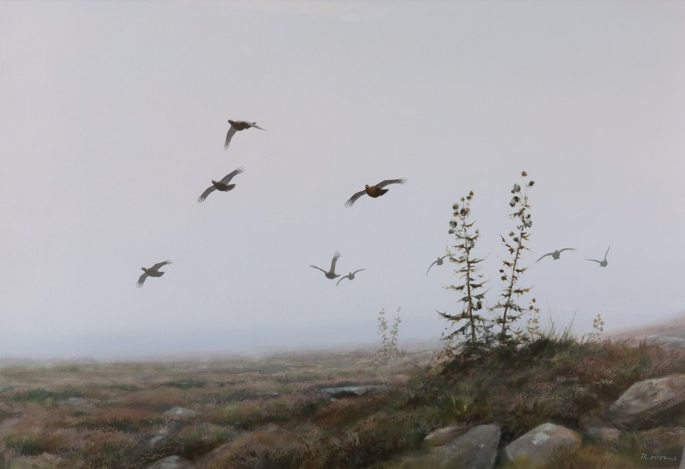 Grouse in the Mist