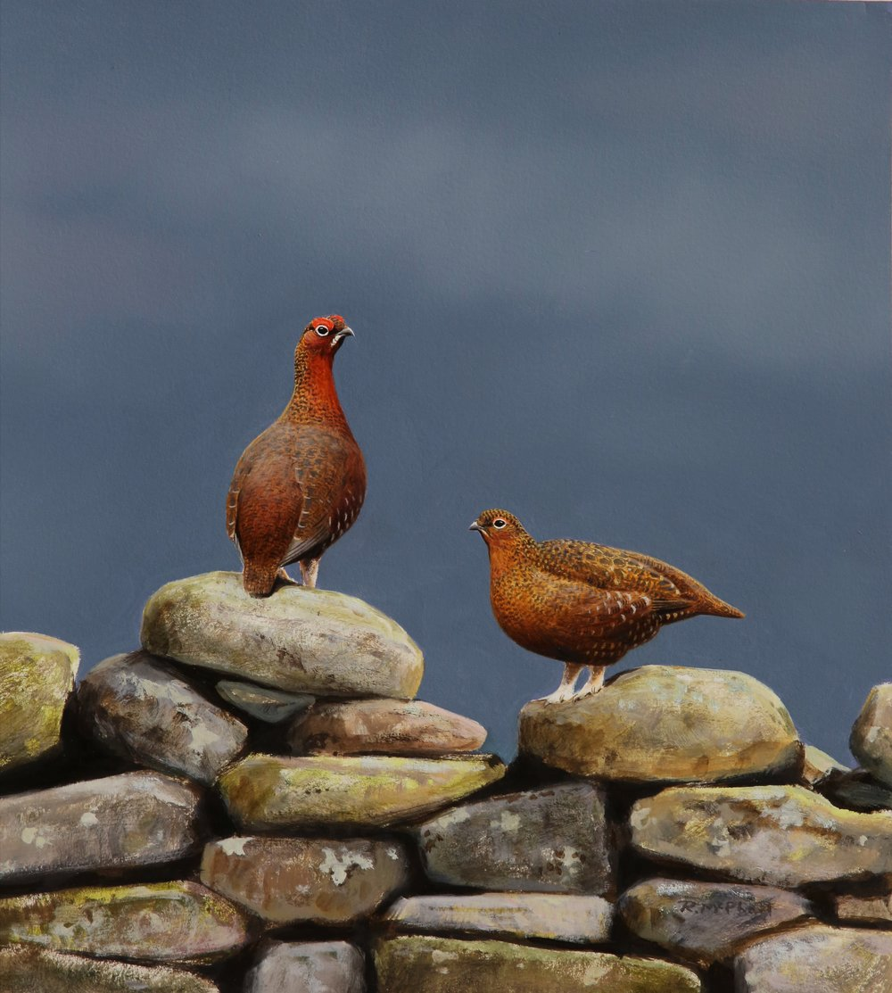 Grouse on a Wall