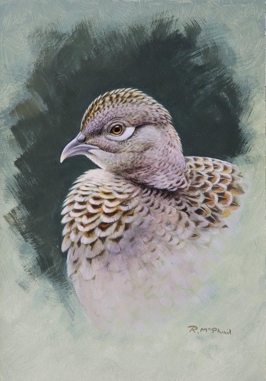 Hen Pheasant Head