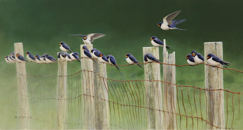 Swallows on a Fence
