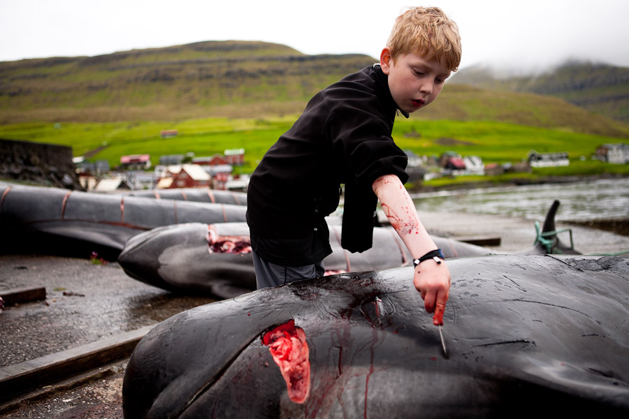 killing whales faroe islands