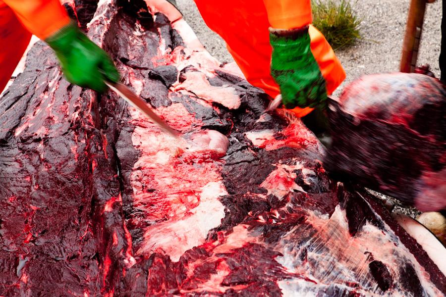 denmark whale hunt