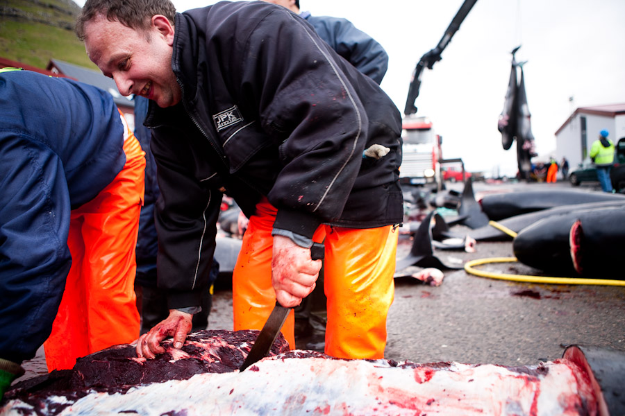 whale hunt faroe islands