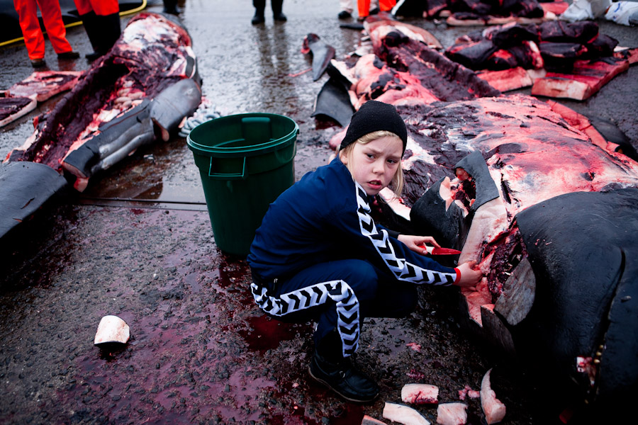 whale hunting denmark