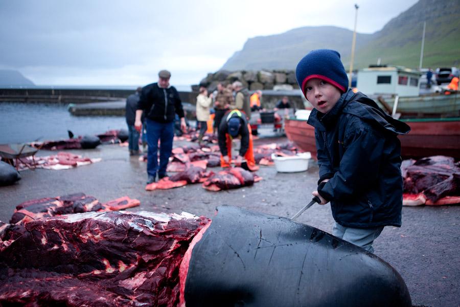 dolphin killing