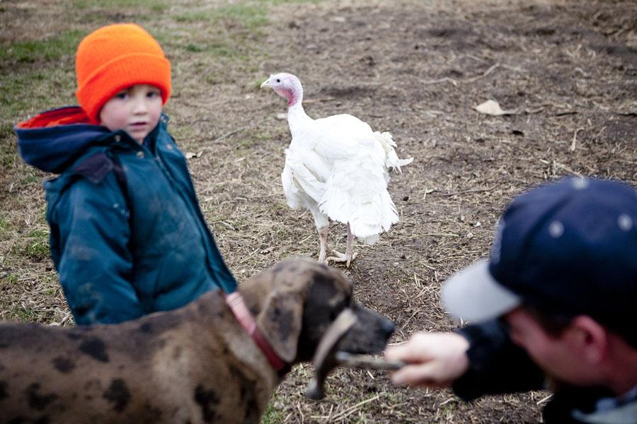 turkey slaughter