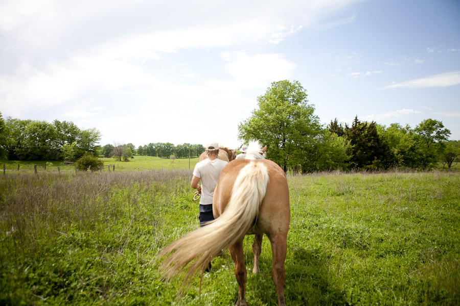 work horses, draft horses, living off the grid, homestead, homesteading, possibility alliance