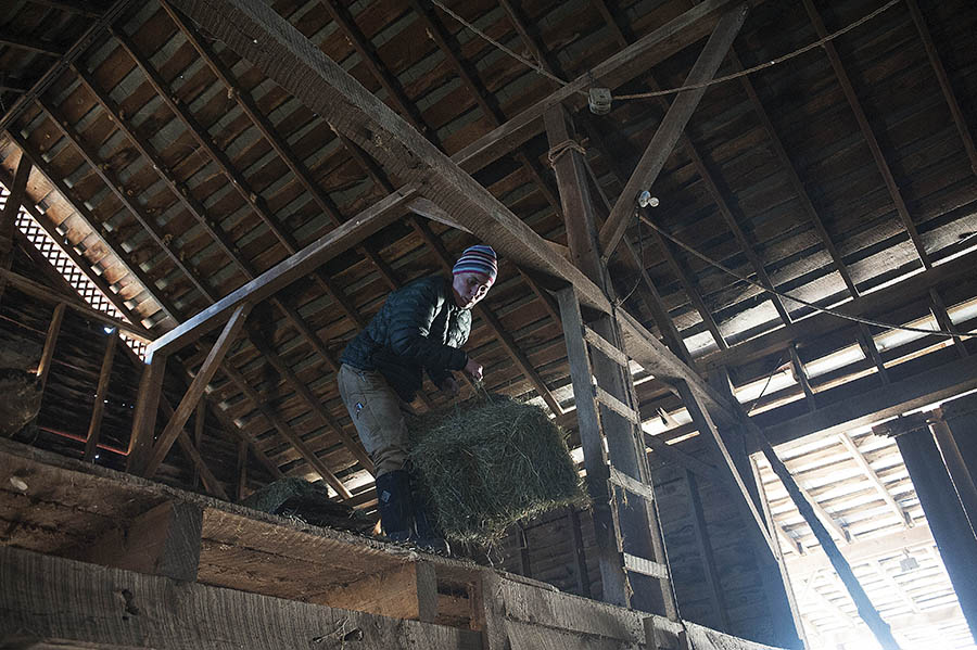 "Jenny Driver throws bales of hay down from the upstairs of the barn at JMD Farm on Wednesday, Feb. 20, 2013, in Staunton. JMD Farm participates in the Waynesboro Farmers Market, whose manager took part in the Staunton Creative Community Funds, ""How to Be a Farmers Market Vendor"" event."