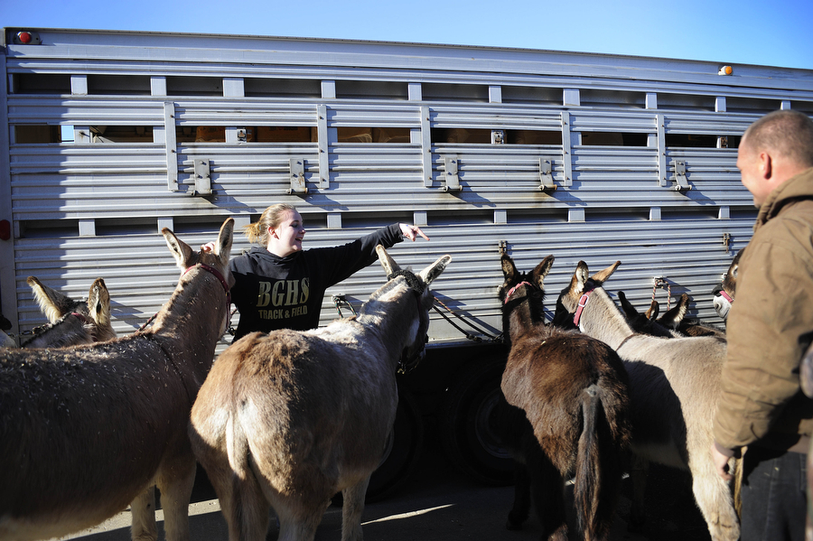 Jeanne Smith points out the short donkeys as they wait outside the school before donkey basketball on Thursday, March 14, 2013, at Buffalo Gap High School.