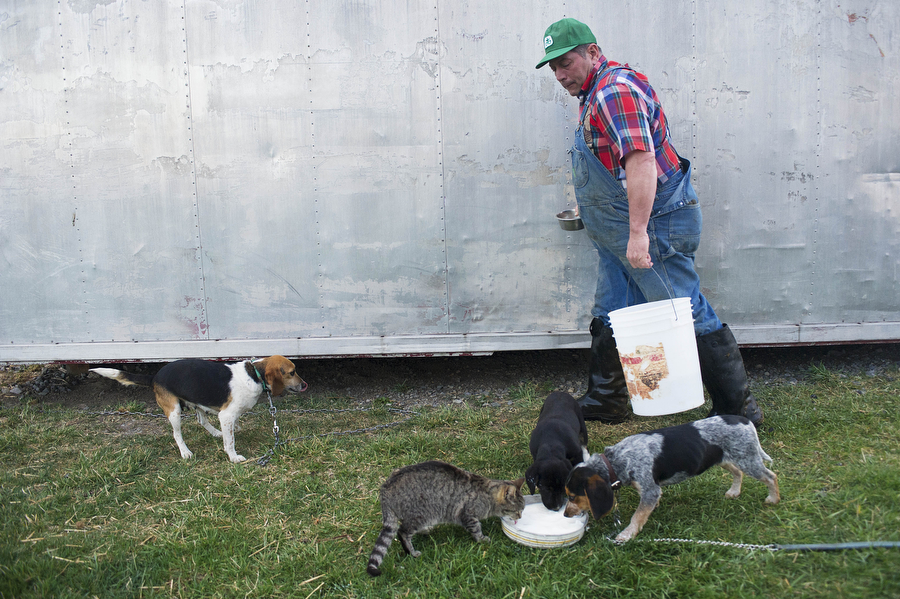 Kenny Will takes a bucket back to the milking barn after feeding raw milk to some of the farm's dogs and cats on Wednesday, April 10, 2013, at Mt. Crawford Creamery. The farm's pets serve many purposes, such as herding cattle, though Frank Will says he wishes the cats were better mousers.