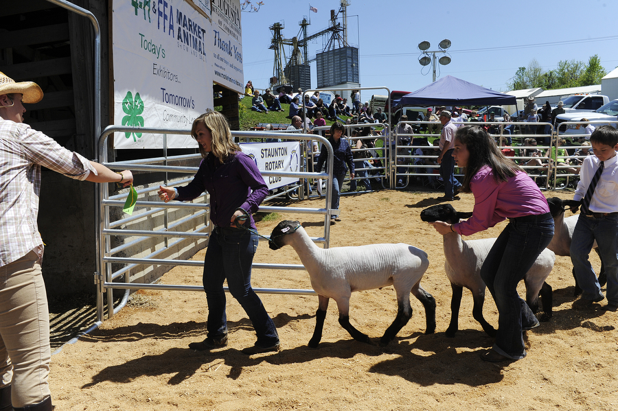 Everyone walks out of the ring after showing their lambs during the Augusta County 4-H and FFA Market Animal Show and Sale on Wednesday, May 1, 2013, in Staunton. This year, the show featured more animals than ever before, even though there were less steers to be shown.