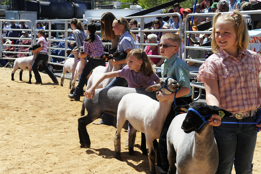 Kids hold their lambs as they're being shown during the Augusta County 4-H and FFA Market Animal Show and Sale on Wednesday, May 1, 2013, in Staunton. This year, the show featured more animals than ever before, even though there were less steers to be shown.
