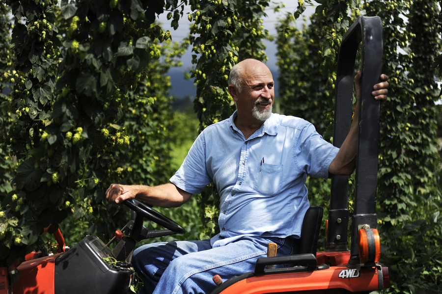 Stan Driver drives a tractor between crowns of bines during a hops harvest at Blue Mountain Brewery on Wednesday, August 7, 2013, in Afton. Members of the Old Dominion Hops Cooperative came together to help with the hop harvest at the brewery.