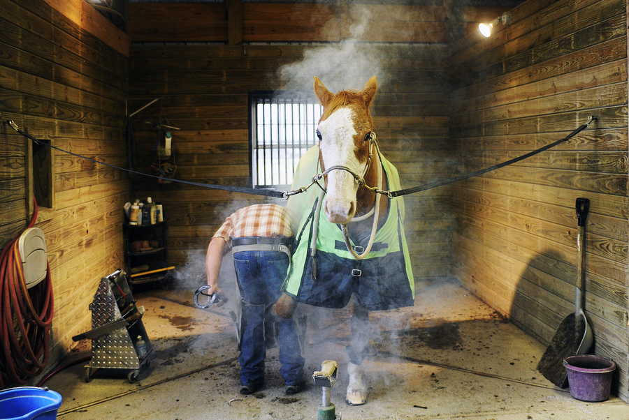 Farrier Dave Bell of Blue Hippo Farrier Service hot-sets a horseshoe on a horse at Breezy River Stables on Friday, Dec. 6, 2013, in Greenville. Hot-setting the shoe helps ensure a proper fit, as it checks the shoe size of the horse.